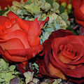 Centerpiece Roses by Richard Bryce and Family