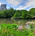 Central Park by Kelly Wade