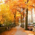 Central Park West by Ariane Moshayedi