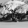 Chance Of Snow by Nicholas J Mast