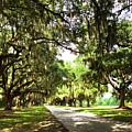 Charleston Oaks 3 by Alan Hausenflock