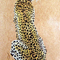 Cheetah by Vallee Johnson