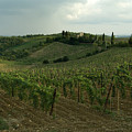 Chianti Vineyards In Tuscany by Todd Gipstein
