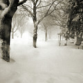 Chicago Blizzard 2011 by Joanne Coyle