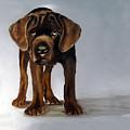 Chocolate Labrador Puppy by Dick Larsen