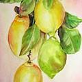 Citrons by Muriel Dolemieux