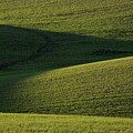 Cloud Shadows On New Growing Crop by Mark Duffy
