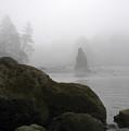 Coastal Fog by Ty Nichols