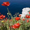 Coastal Poppies by Richard Garvey-Williams