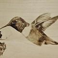 Colibri by Ilaria Andreucci