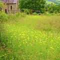 Collection Of Wildflowers by Stuart Parnell