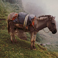 Colombian Burro In The Fog by Lawrence Costales