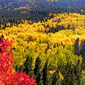 Colorado Autumn by George Tuffy