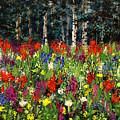 Colorado Rockies Wildflowers by Connie Tom