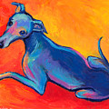 Colorful Greyhound Whippet Dog Painting by Svetlana Novikova