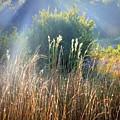 Colorful Morning Marsh by Carol Groenen