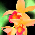Colorful Orchid by Nanette Hert