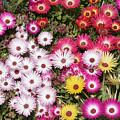Colors Of Spring by Masami Iida
