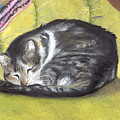 Comfortable Cat by Pamela Wilson