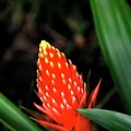 Cone Of Color by Debbie Karnes
