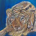 Contented Tiger by Mikki Alhart