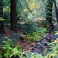 Cool Creek On Mt Tamalpais by Ben Upham III