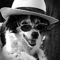 Cool Dog  by Cliff Norton