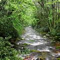 Cool Green Stream by Shari Jardina