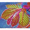 Copper Beech Leaves by Patricia Fatta