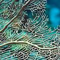 Coral Texture by MotHaiBaPhoto Prints