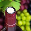 Cork Of Wine Bottle  by Anna Om