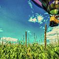 Cornfield View Hot Air Balloons by Bob Orsillo