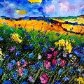 Cornflowers 680808 by Pol Ledent