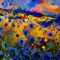 Cornflowers 746 by Pol Ledent