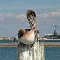 Corpus Christi Pelican by Mark Grayden
