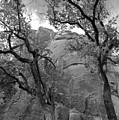 Cottonwood Trees-zion by Stephen  Vecchiotti