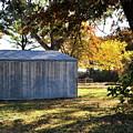 Country Shed by Mary J Hicks