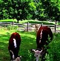 Cows Grazing by Ian  MacDonald
