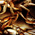 Crabs Awaiting Their Fate by Jennifer Bright