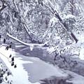 Cranberry River Winter Heavy Snow by Thomas R Fletcher
