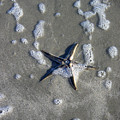 Creatures Of The Gulf - A Fallen Star by Lucyna A M Green