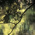 Creekside Color 2 by Charlie Osborn