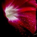 Crimson by Lisa Jayne Konopka