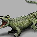 Crocodile by Kevin Middleton