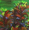 Crotons 6 by Usha Shantharam