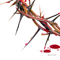 Crown Of Thorns by Dennis Schmelzer
