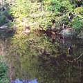 Crystal Lake Reflection by Patricia Taylor