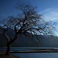 Cultus Tree by Monte Arnold