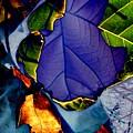Curved Leaf by Beth Akerman