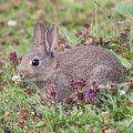 Cute Baby Bunny by Bob Kemp